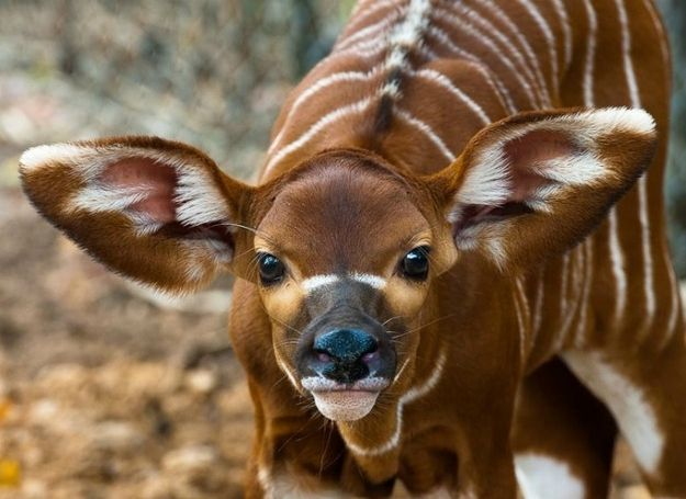 22 Of The Cutest Animal Babies You Ve Never Seen Before Baby Animals Cute Baby Animals Animals