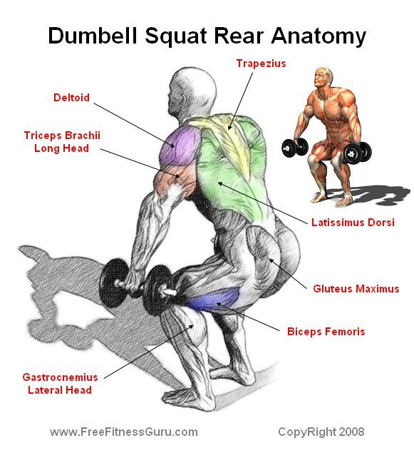 dumbell squat anatomy | Work out 2 | Pinterest