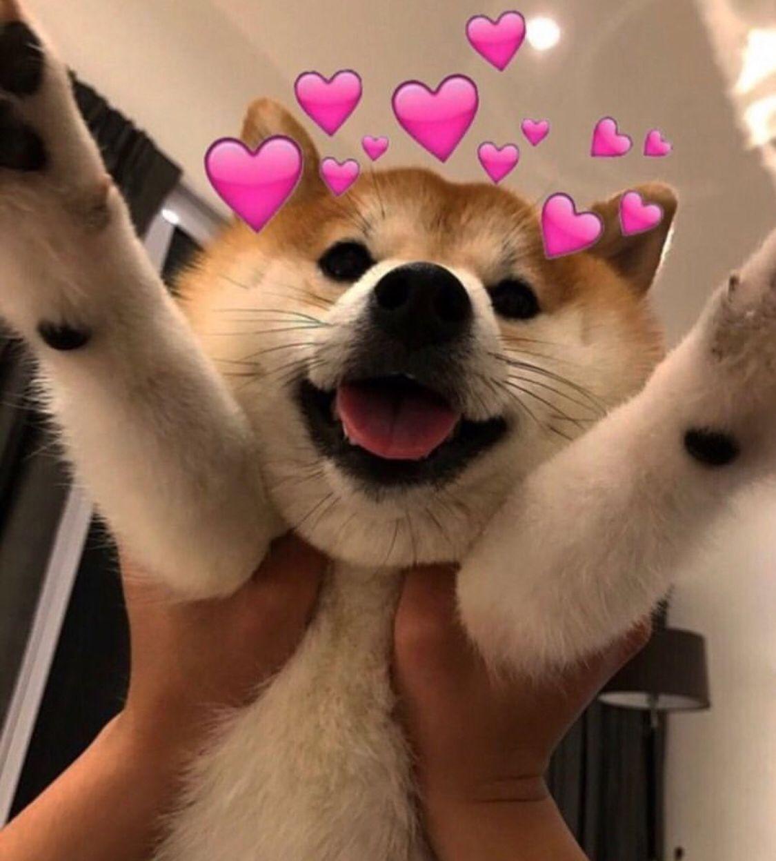 ʚ ɞ Follow Me For More Portialina ʚ ɞ Also Go Sub To My Channel Link In Bio ʚ ɞ Cute Love Memes Cat Memes Cute Dogs