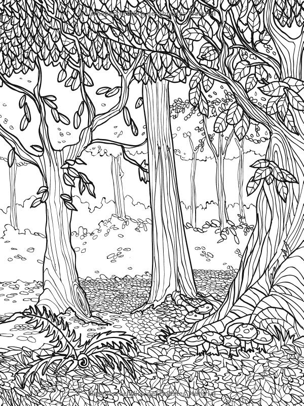 этого жанра картинки раскраски лесных деревьев принято