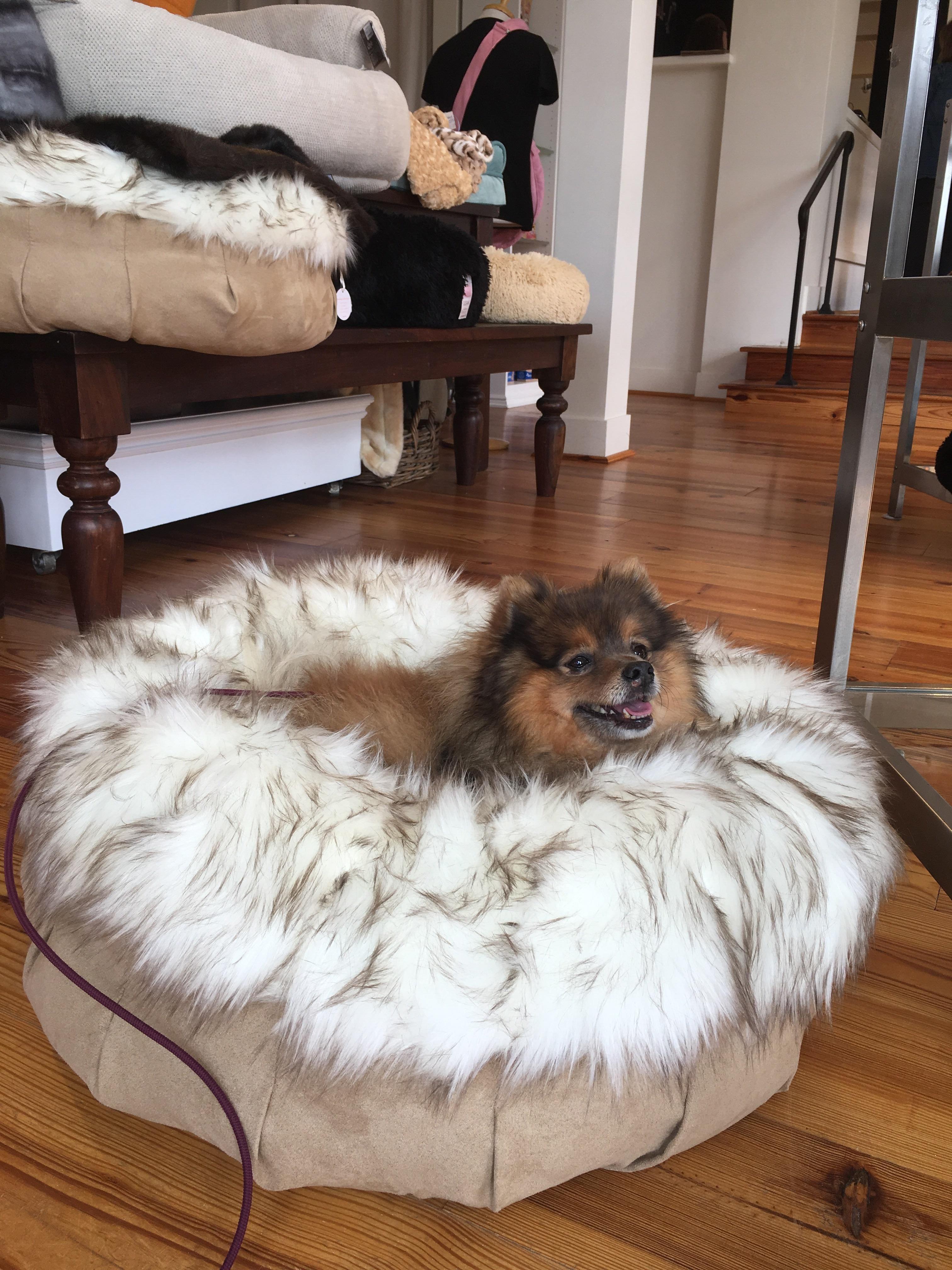 A fluffy pup in a fluffy puff #Cute