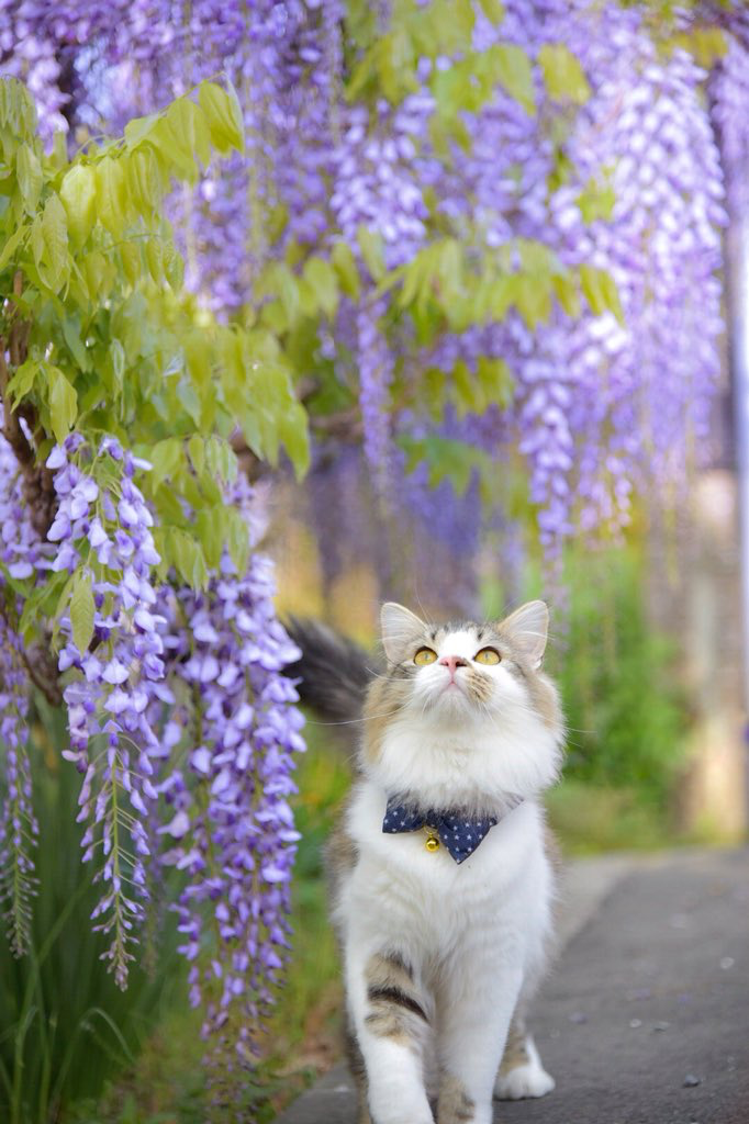 Wisteria Kitty Cats Beautiful Cats Cute Cats And Kittens