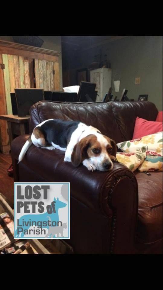 Mobile Uploads Lost Pets Of Livingston Parish Facebook Losing A Pet Livingston Parish Losing A Dog