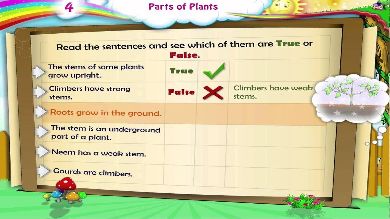 Learn Grade 3