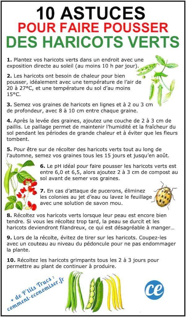 100 Astuces Potager Pour Faire Pousser Vos Légumes FACILEMENT.