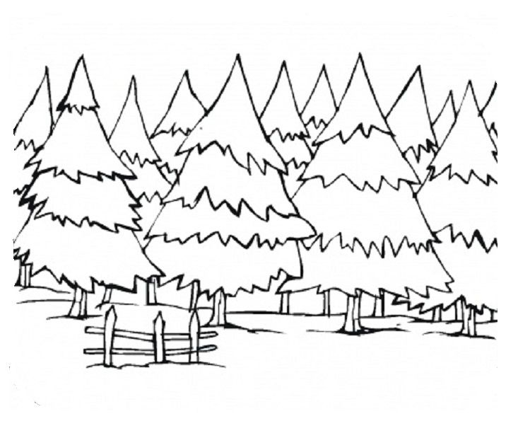 Pine Trees Coloring Page Tree Coloring Page Forest Coloring Pages Coloring Pages Winter