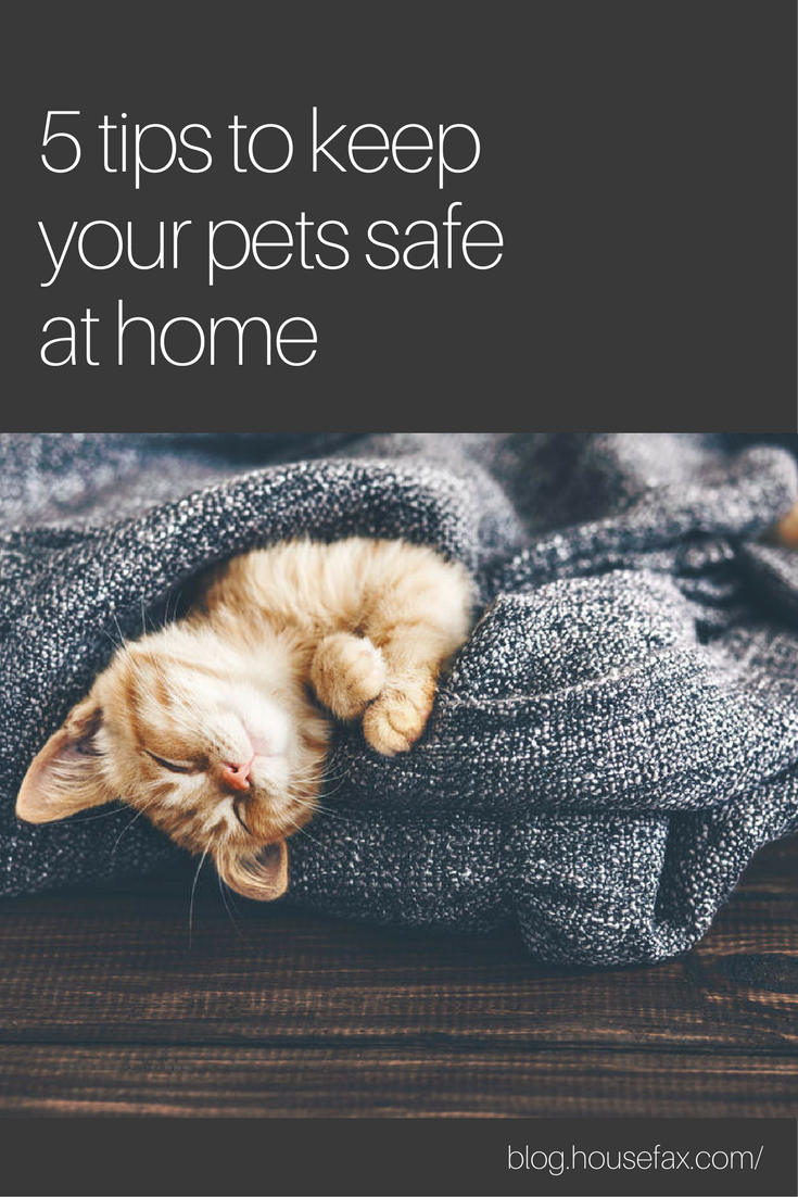 As pet owners, it's our job to keep our pets safe at home