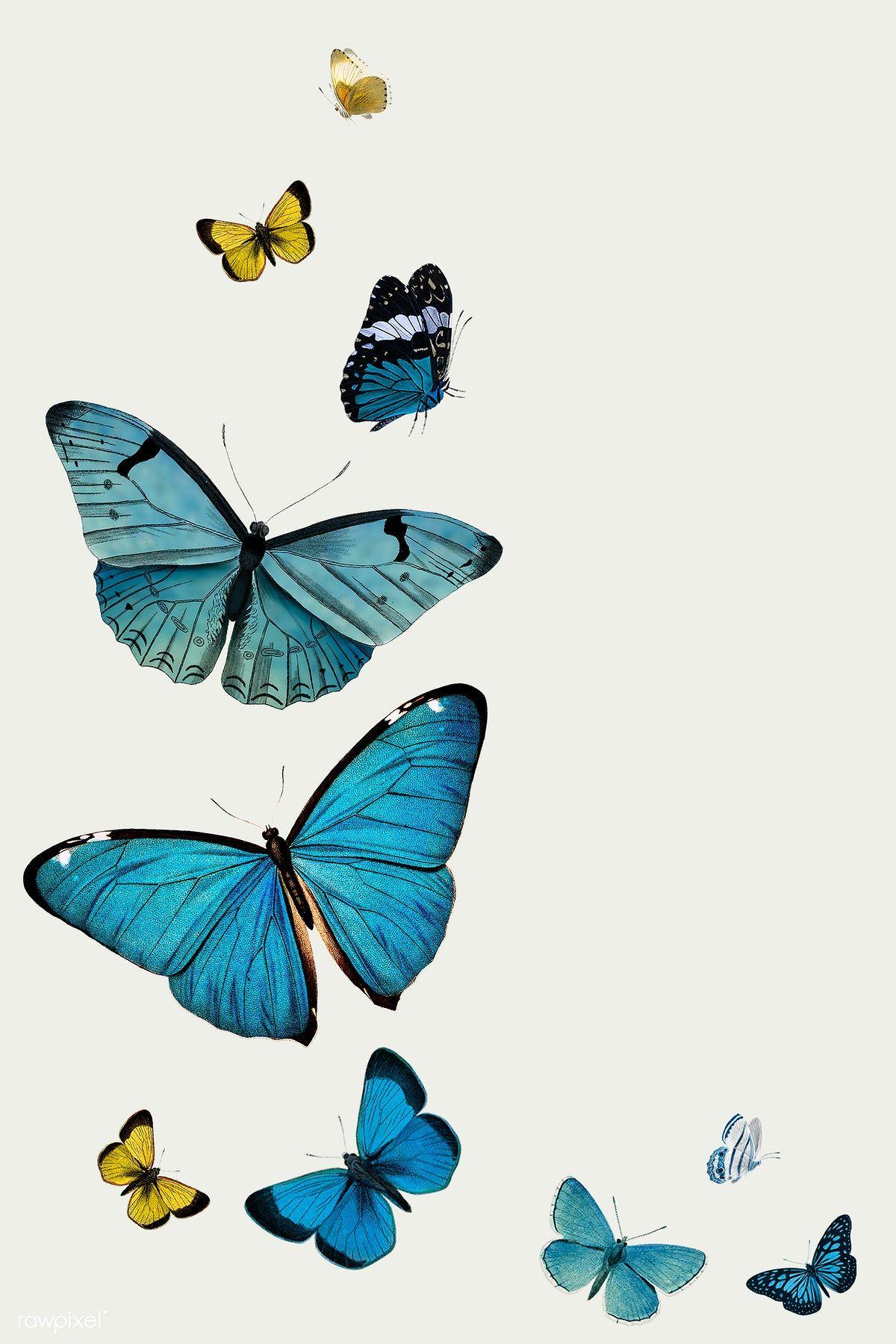 Download Premium Illustration Of Vintage Common Blue Butterflies Blue Butterfly Wallpaper Butterfly Wallpaper Iphone Butterfly Illustration