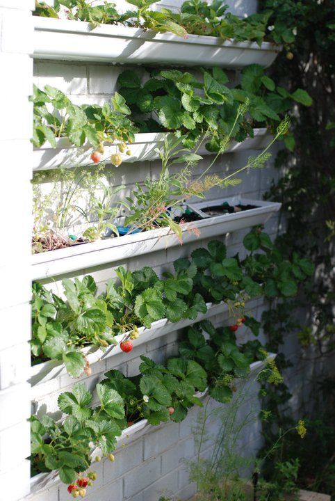 Rain Gutter Gardens Vertical vegetable gardens, Gutter