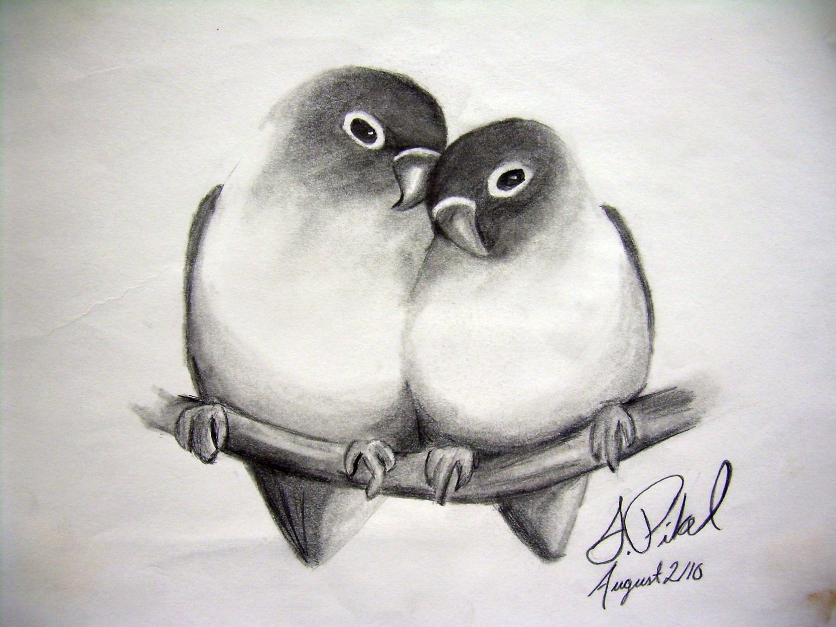 Image Result For Love Pencil Bird Drawings Pencil Art Love Bird Sketch