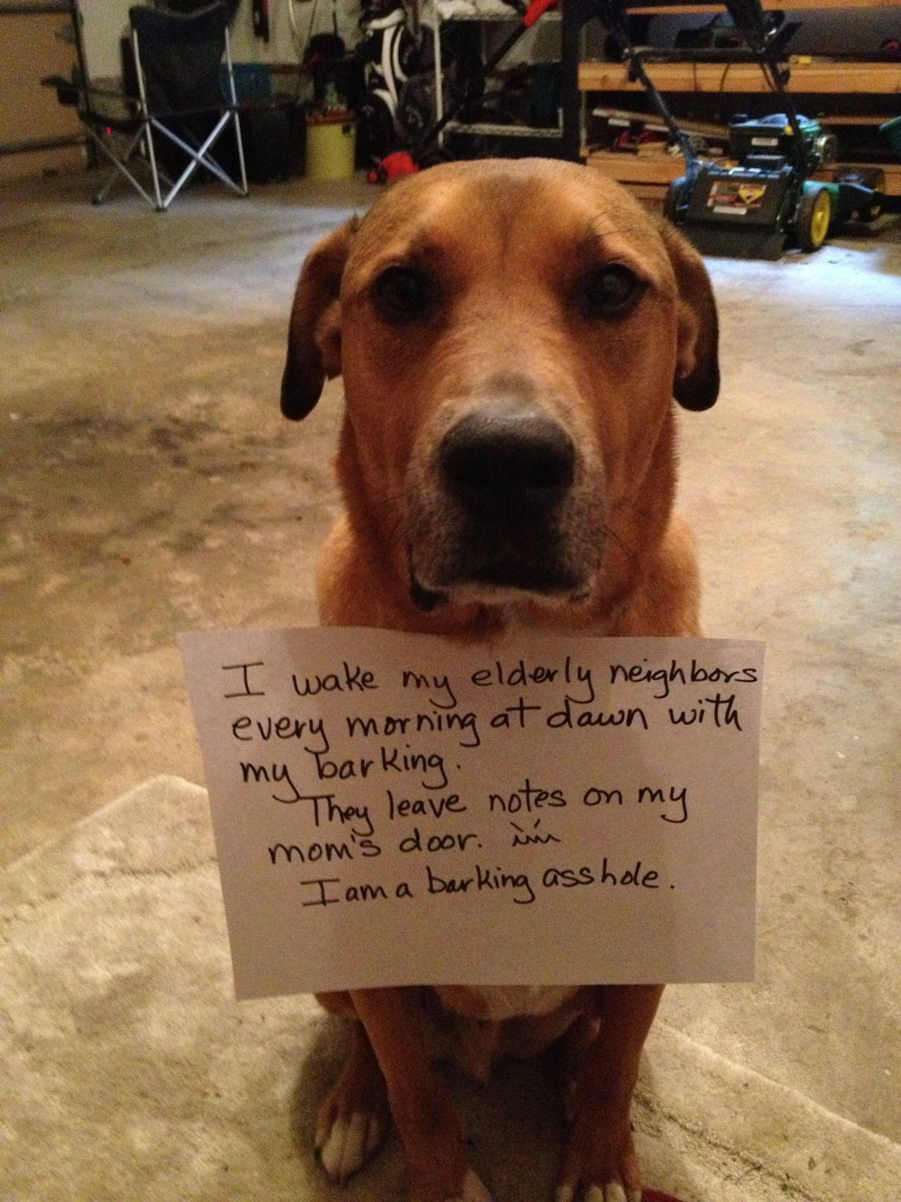 I Wake My Elderly Neighbors Every Morning At Dawn With Barking They Leave Notes On My Moms Door Im A Barkinghole