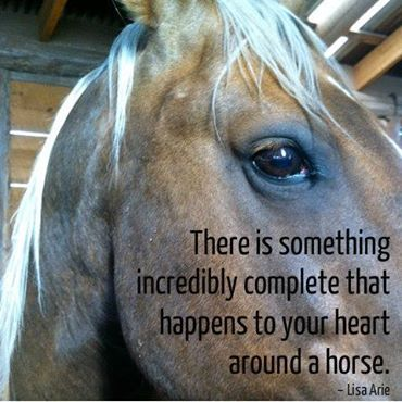 Heart and horses #executives #curiosity #CEOmentoring  #selfdiscovery #courage #PersonalEvolution #horses #heart