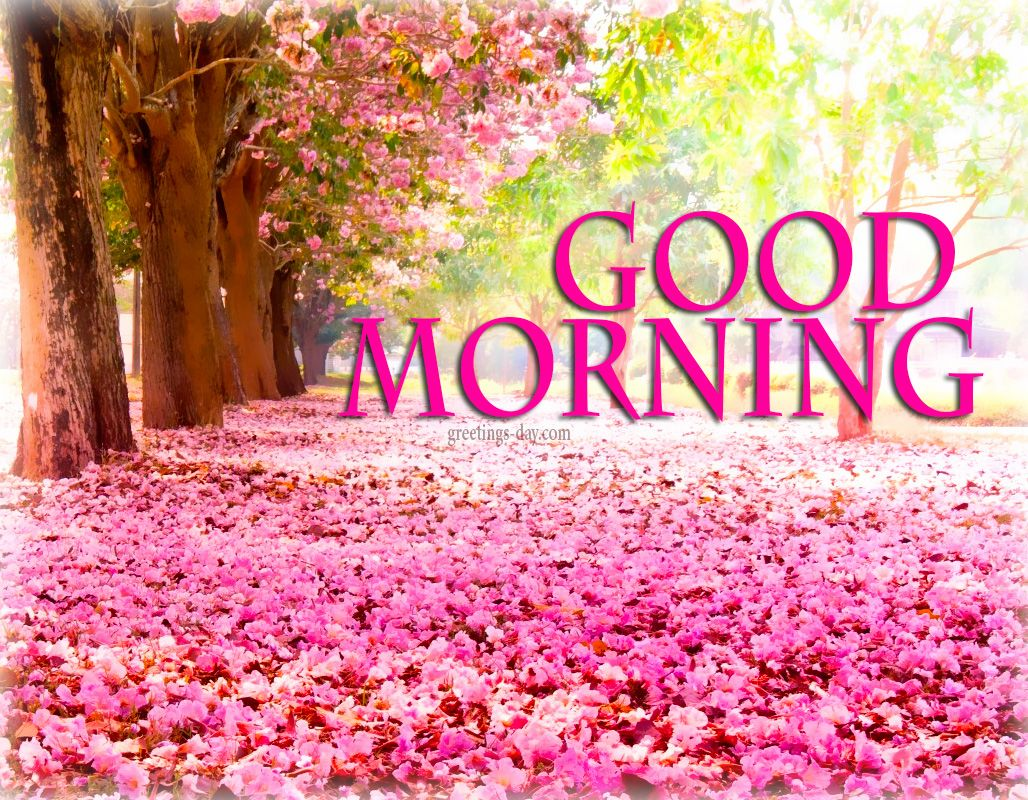 Animated Good Morning Quotes Best Good Morning Images  Yahoo Search Results Yahoo Image Search