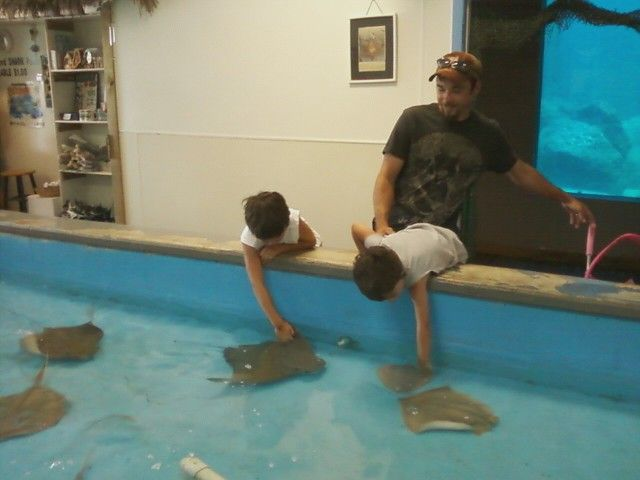 Tarpon Springs FL - Aquarium   Tarpon springs florida ...