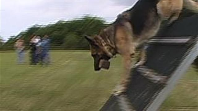 Training For Schutzhund Dog How To Make Your Dog Stand And Star