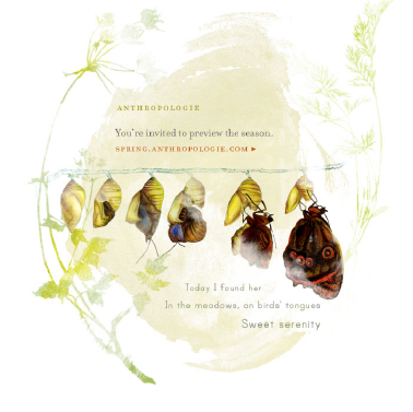 Anthropologie wings email #Anthropologie #wings #moth #butterfly #cocoon #rebirth #evolve