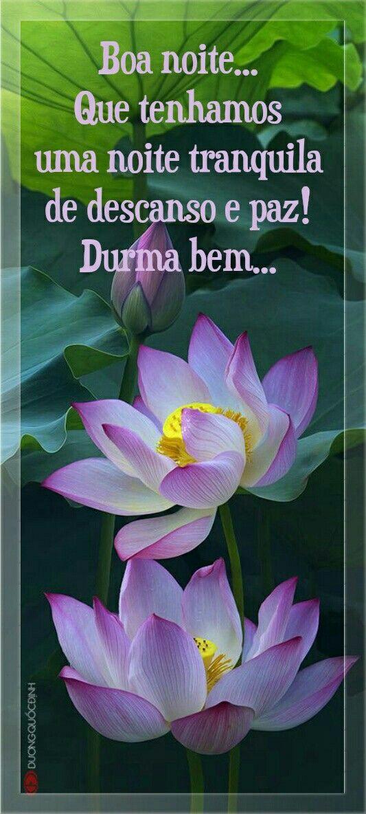 Flor De Lotus Mensagem De Boa Noite