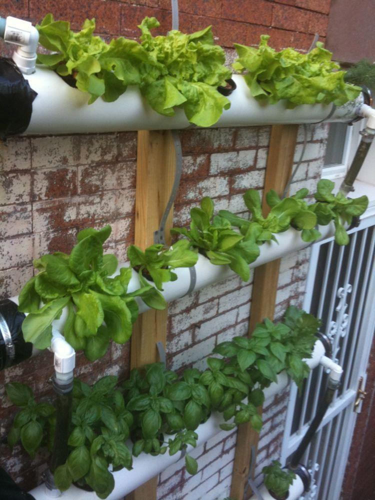 Continuous Flow Aquaponic wall systems (With images