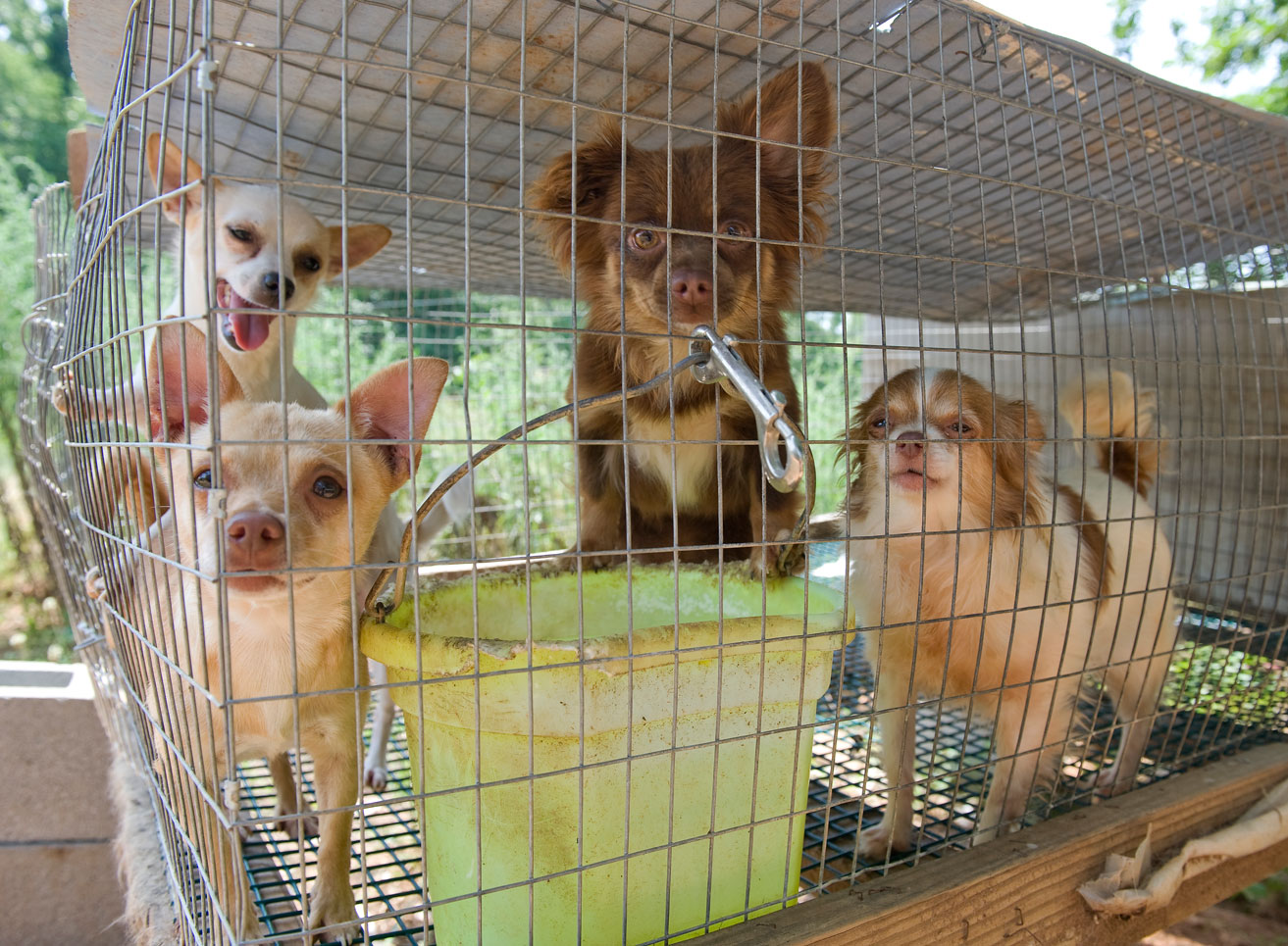 Skype will feel Puppy mills, Puppies, Mercy for animals