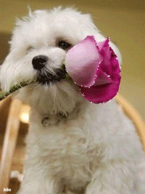 Lindos Gif Animados De Perritos Sosteniendo Una Flor En Su Hocico