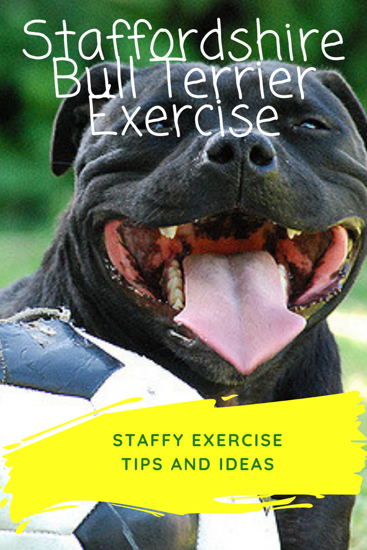 Pin On Dog Exercise