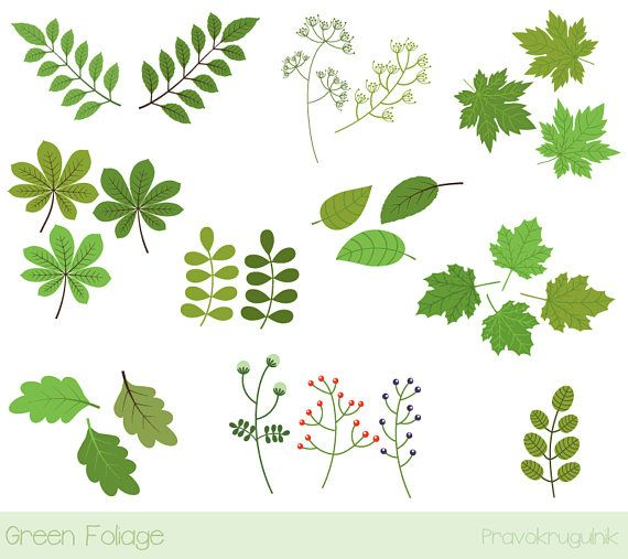 Leaves spring. Green leaf clipart foliage