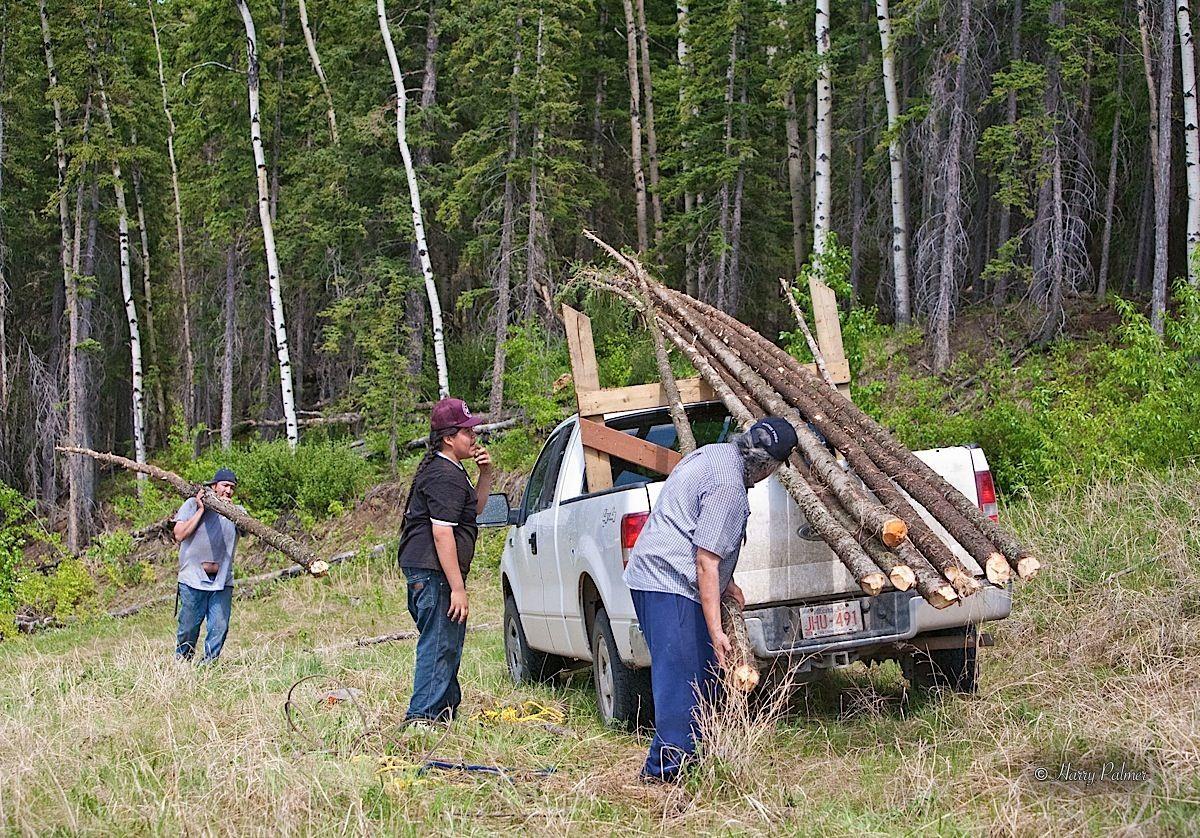 Collecting new teepee poles near bragg creek 2007