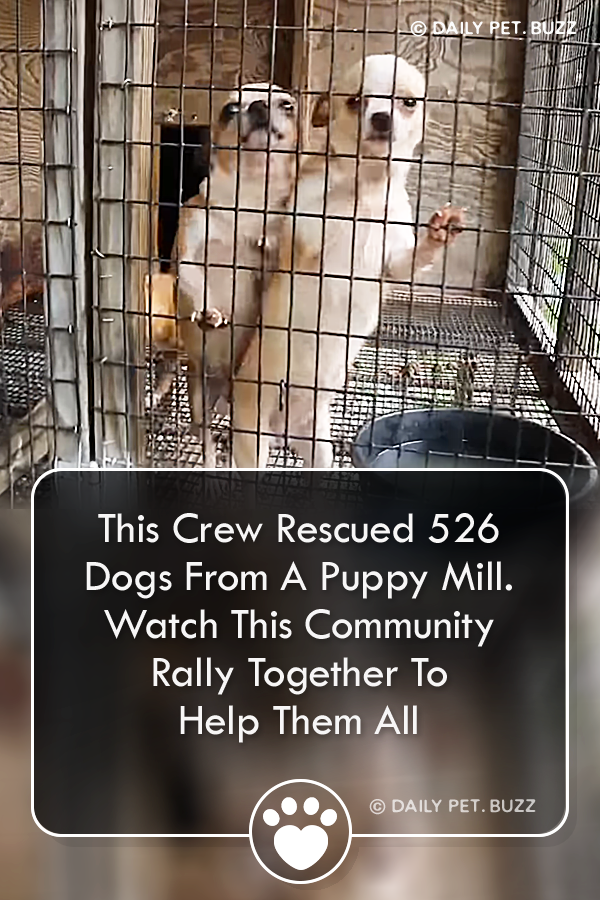 A dog trainer helps uncover and close down a puppy mill Over 500 dogs were rescued Watch their journey from rescue to adoption via dailypetbuzz A dog trainer helps uncove...