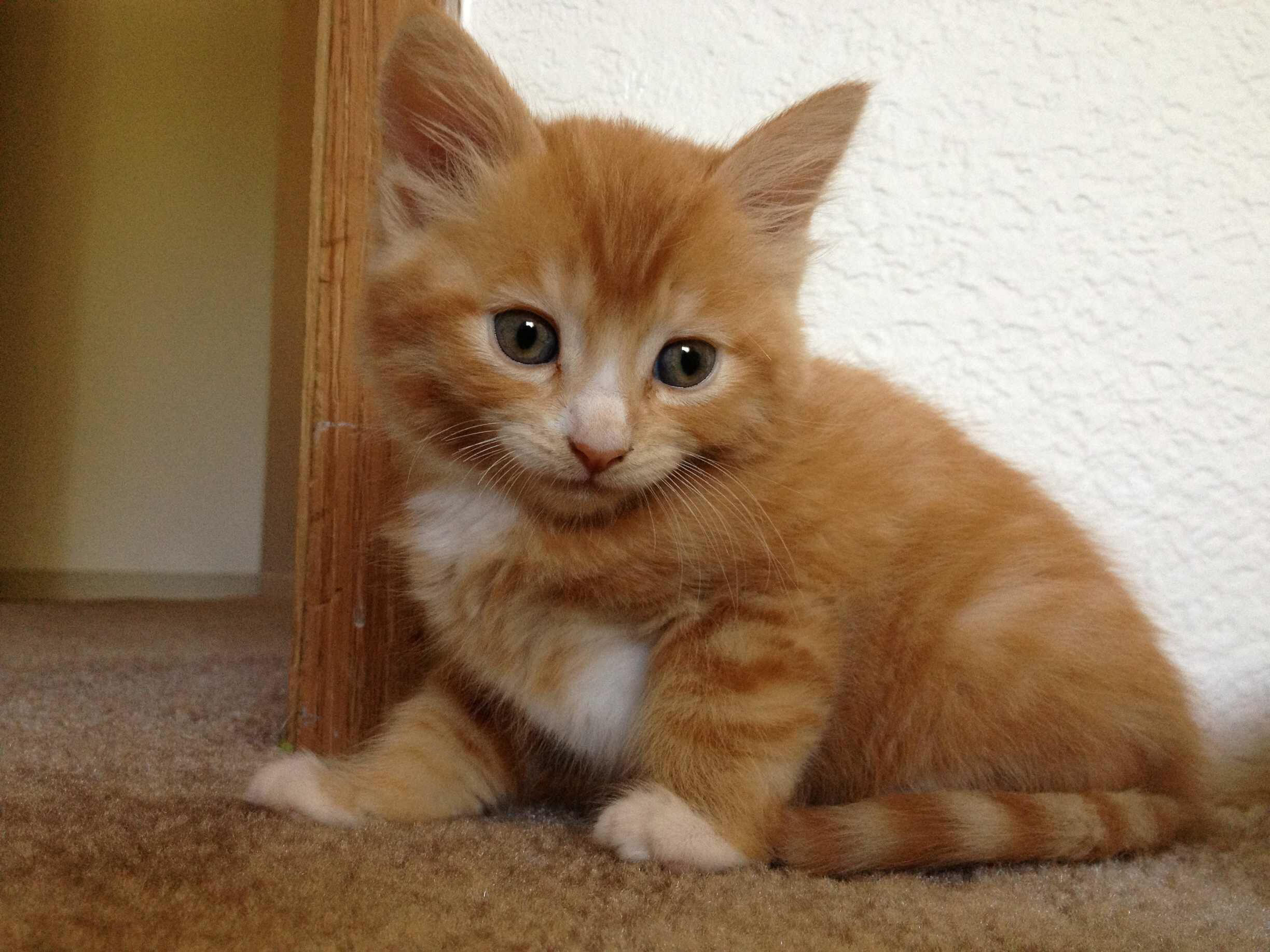 I Wish They Stayed This Size Forever Kittens Cutest Funny Animals Kittens