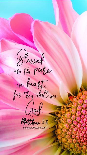 Pink Daisy Matthew 5:8