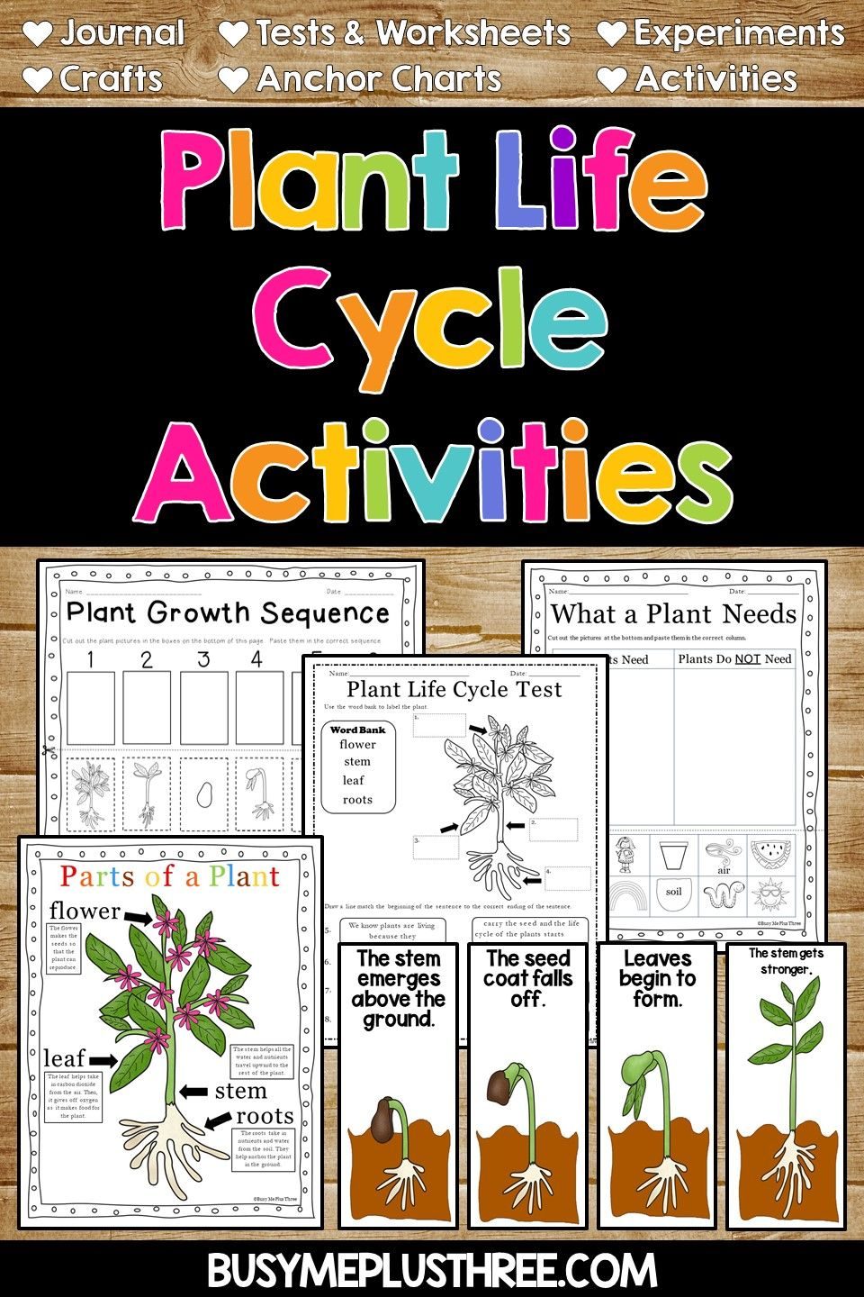 Plant Activities And Anchor Charts Plant Life Cycle Worksheet Plant Life Cycle Life Cycles [ 1440 x 960 Pixel ]
