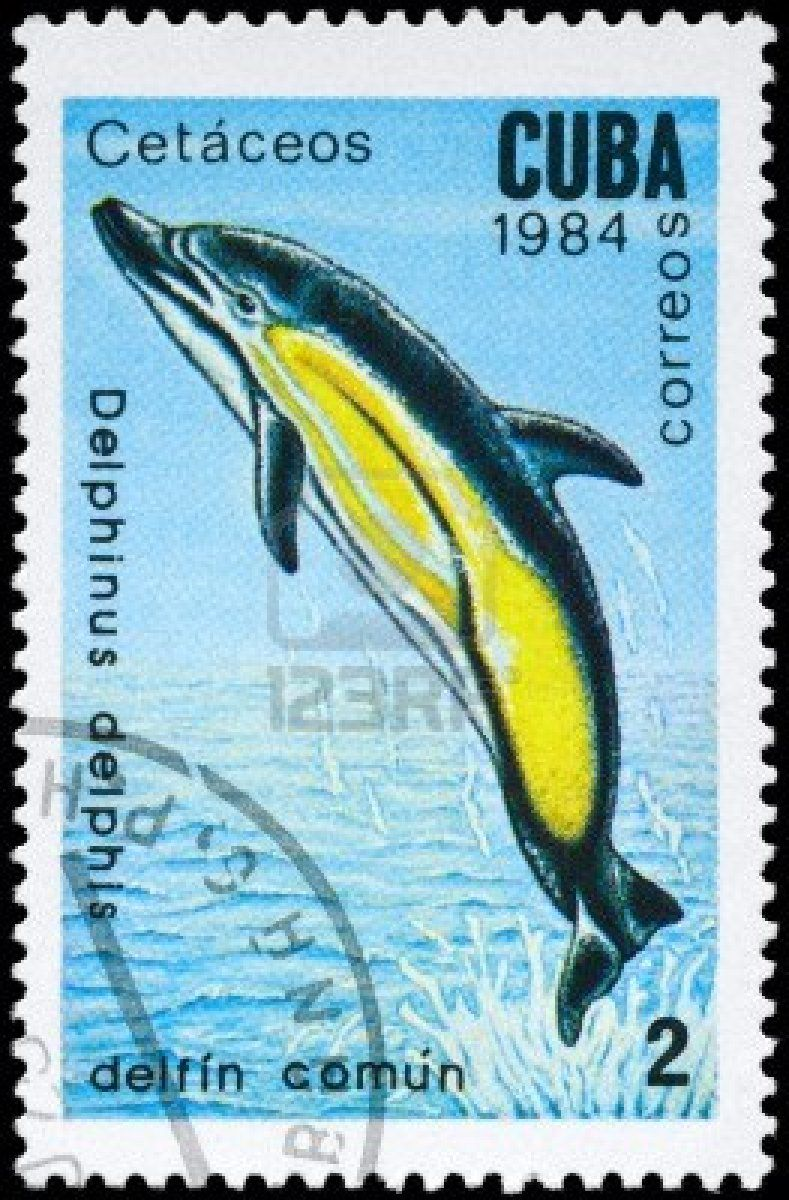 Google Image Result for http://us.123rf.com/400wm/400/400/alzam/alzam1103/alzam110300127/9045877-cuba--circa-1984-a-stamp-printed-in-cuba-shows-image-of-a-short-beaked-common-dolphin-with-the-descr.jpg