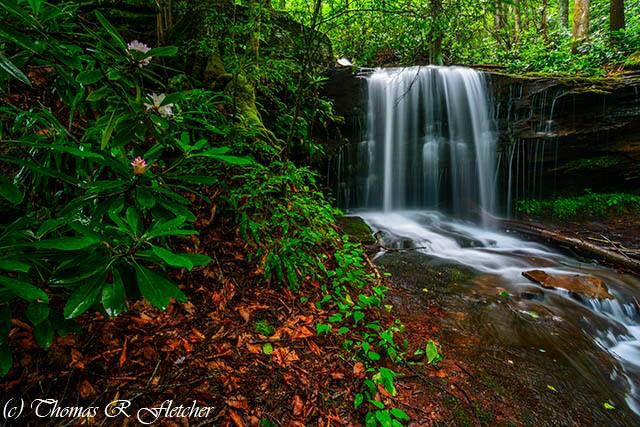 """""""State Flower and Waterfall""""  ~ West Virginia ~TRFP"""