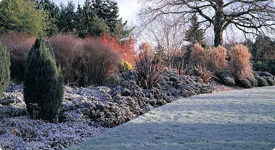find this pin and more on gardens winter by wandaongaro