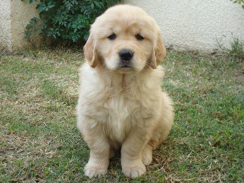 Pin On Goldens R A Fit