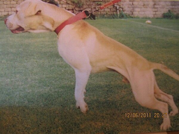 Bolio/tombstone dog down from tonkabear r o m | Game APBT