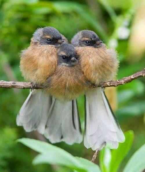 Anna Izilda - Dama   Facebook   Pássaros bonitos, Aves de ...