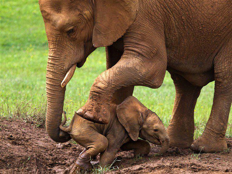 Mensch und Elefant