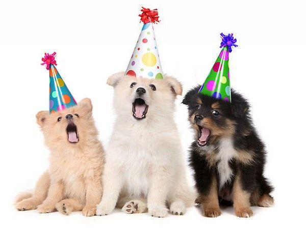 happy-birthday-dog02