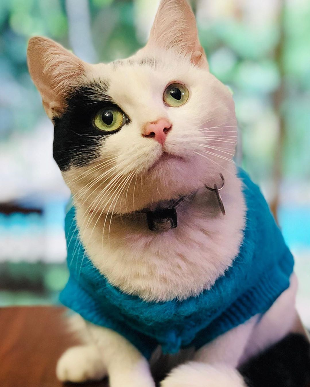 Meet The Incredibly Cute Cat With A Grade Five Heart