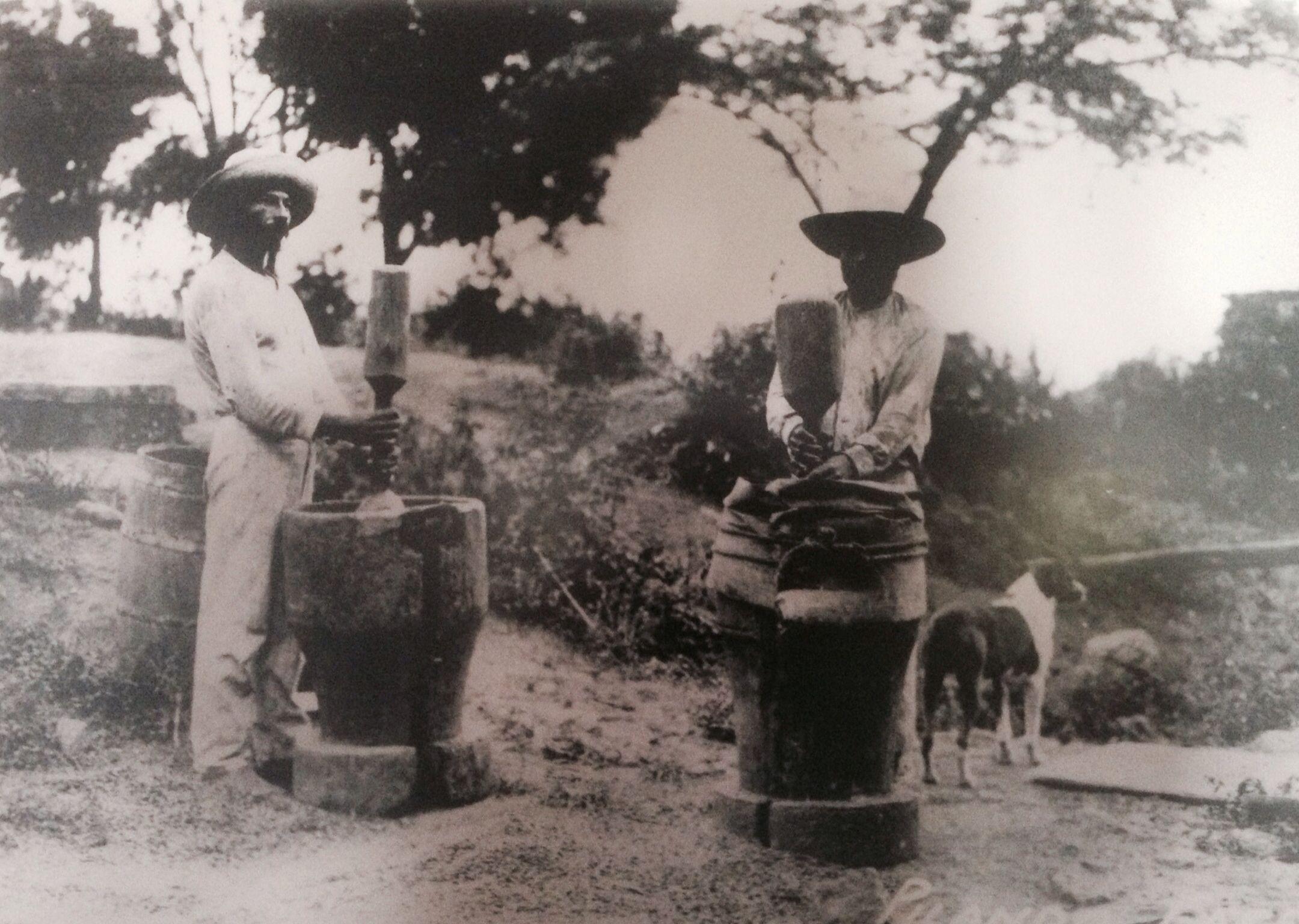 Pilando Café 1916, Picture From Hacienda San Pablo, Jayuya, Puerto Rico