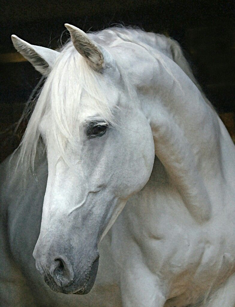 Pin by sonja on Horses, Basically Just Big Dogs   Pinterest   Horse ...