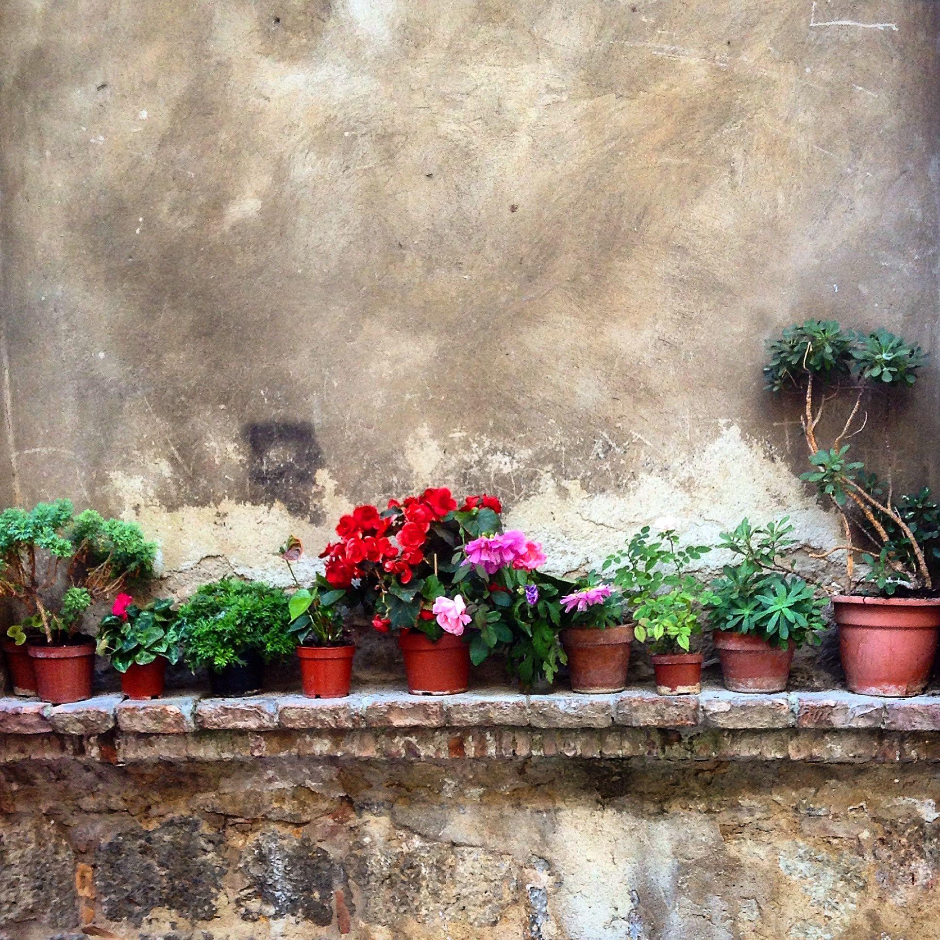 Wall Garden Italy