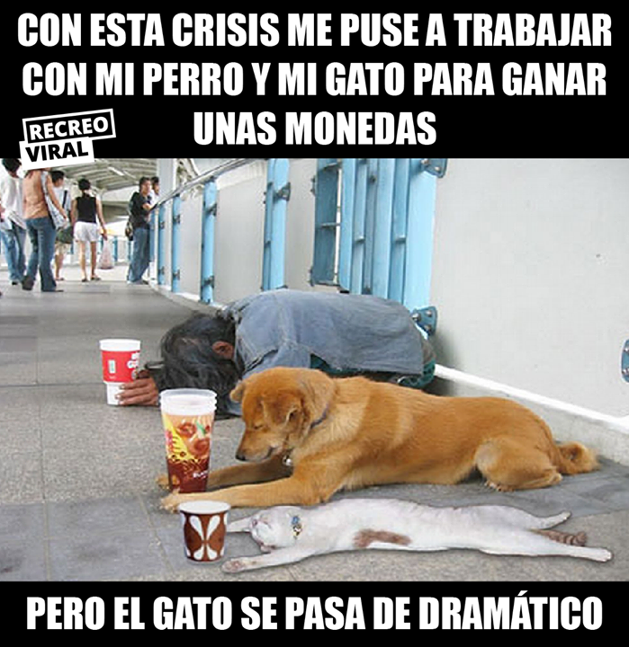 Untitled Memes Perros Perros Imagenes De Risa