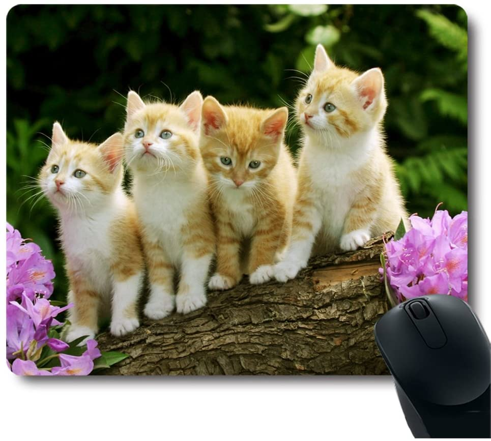 Amazon Com Four Cute Baby Cat Kitten Stand With Flower Customized Mouse Pad Office Products In 2020 Cute Baby Cats Cute Cats Baby Cats