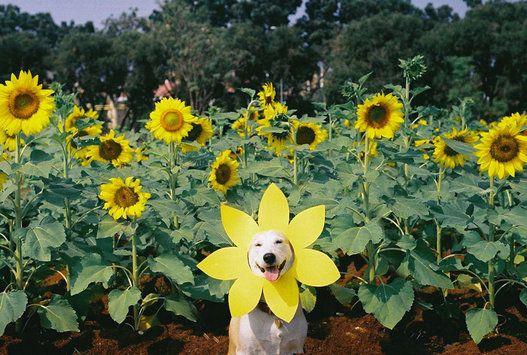암을 이겨낸 개 글루타의 언제나 웃는 얼굴(사진) | The Huffington Post