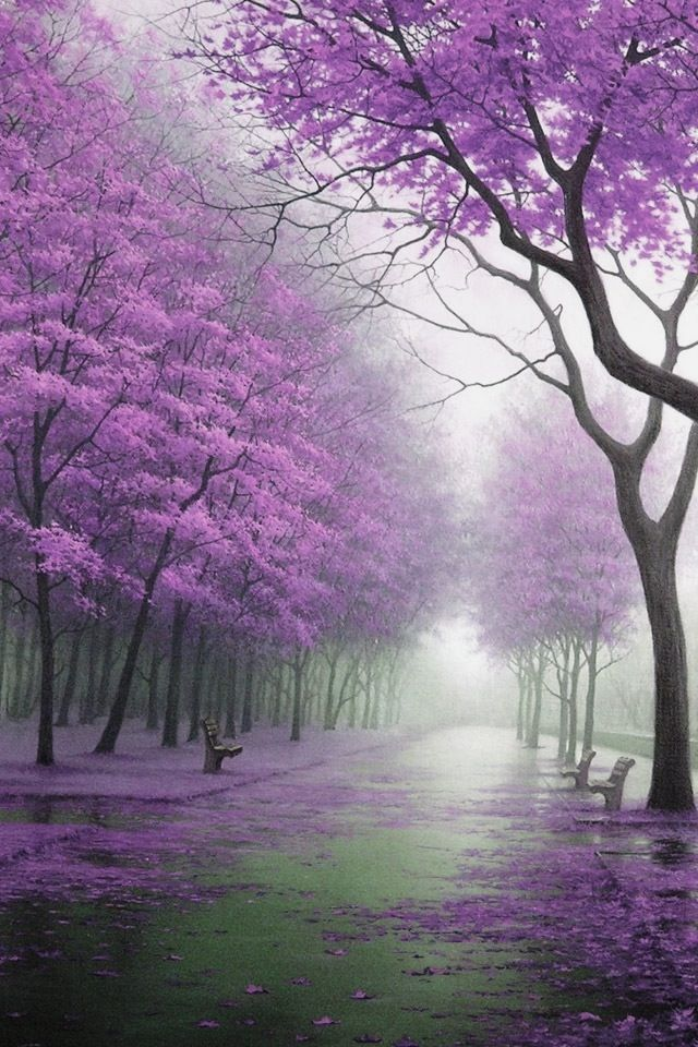 Purple Mist Beautiful Nature Beautiful Landscapes Nature Pictures