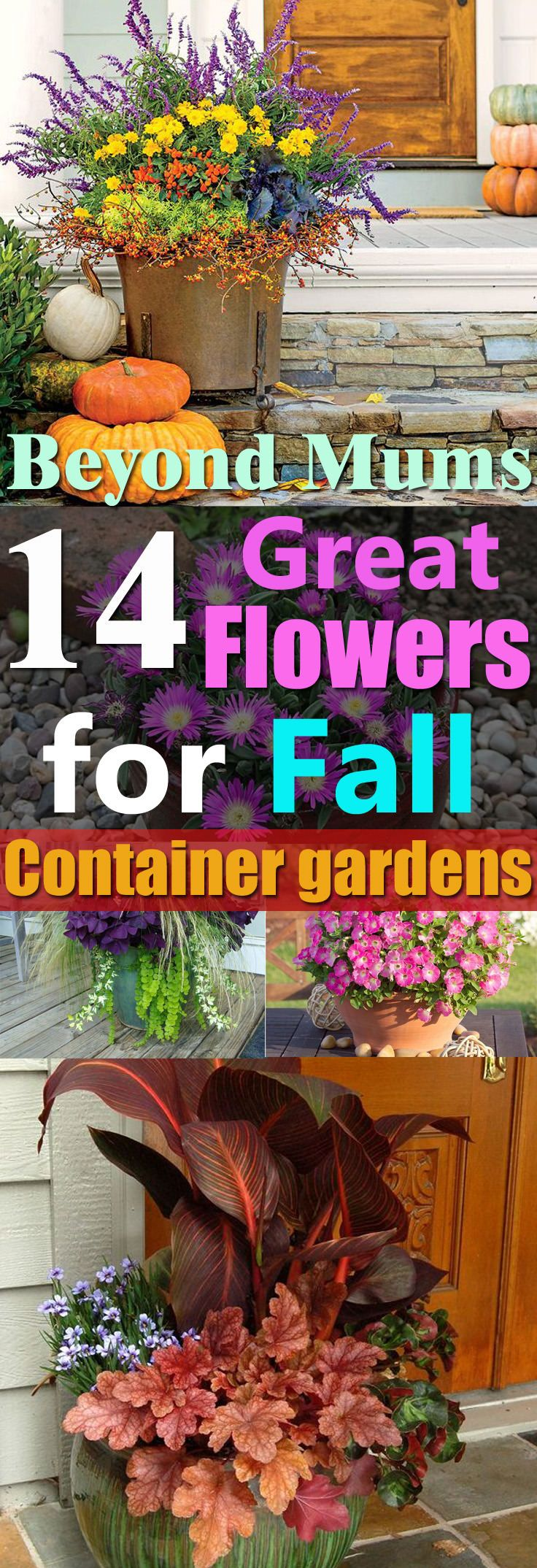 Not only the mums, but there are also other fall flowers for containers that you can grow for a great show of colors in autumn!
