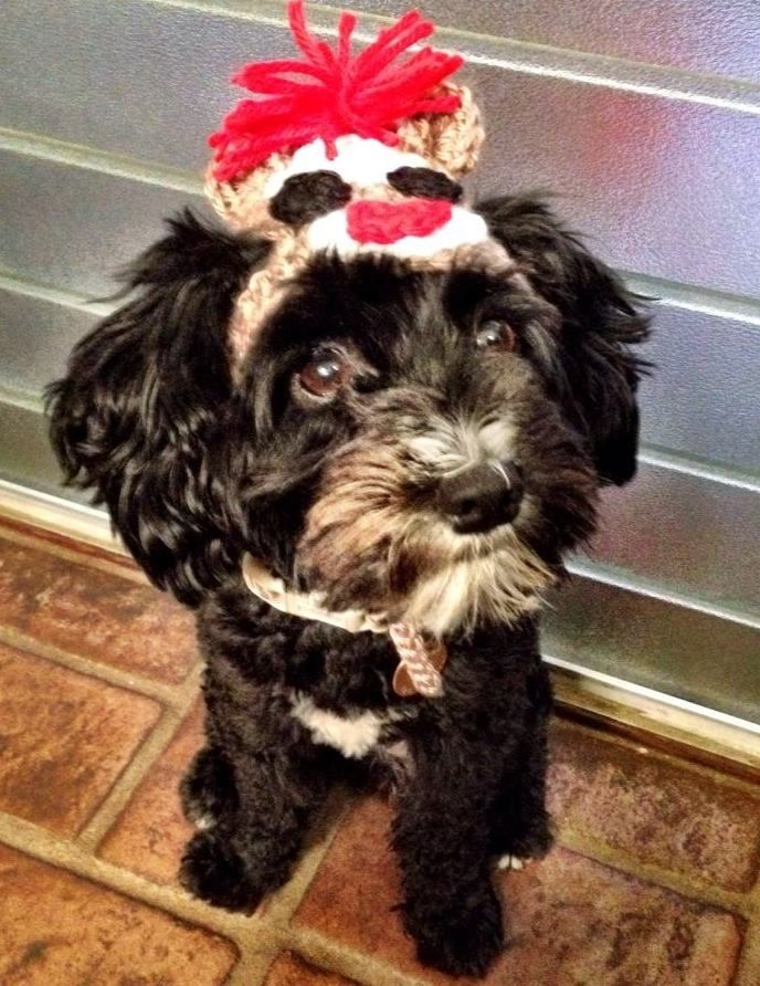 Schnoodle Dog Sock Monkey Costume Schnoodle Schnoodle Dog Dog Socks