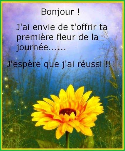 Citations Option Bonheur Bonjour Avec Une Fleur Bonjour